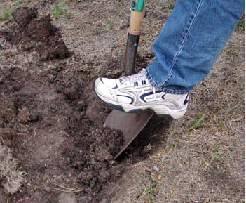 No till gardening fairfax gardening - What does it mean to be a master gardener ...