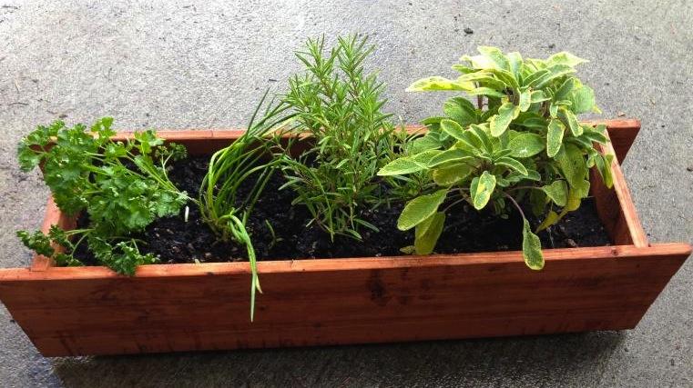 Windowsill Herbs Fairfax Gardening
