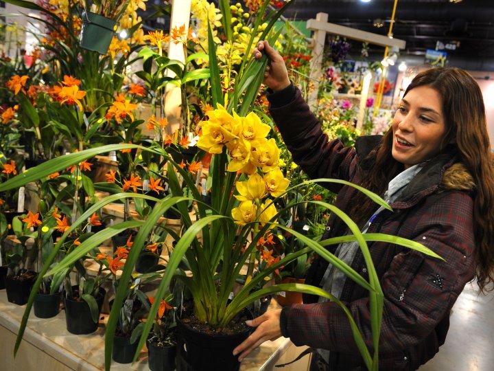 Philadelphis Flower Show