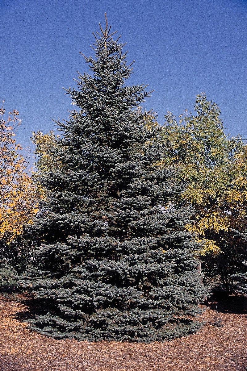 name that tree