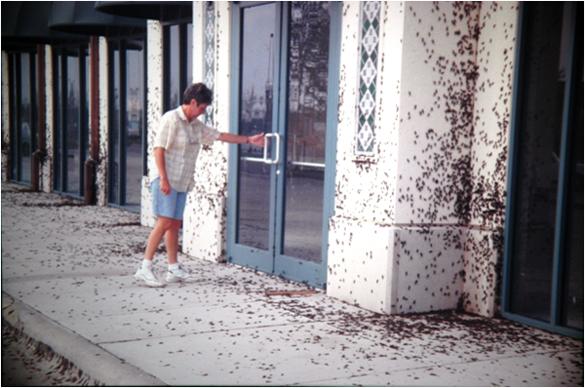 field cricket infestation