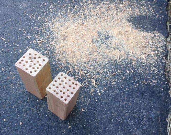 mason bees blocks