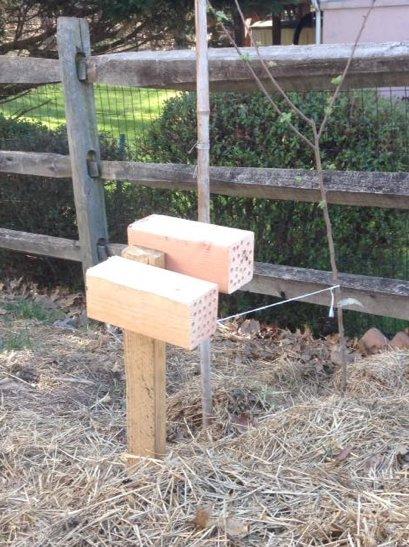 Mason bee blocks