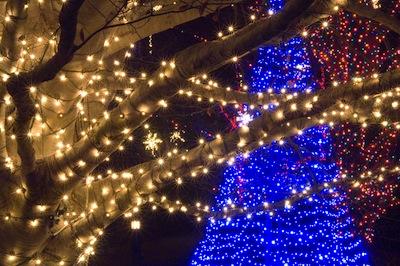 Longwood Lights