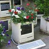 computer with plants