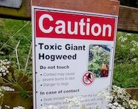hogweed sign
