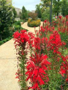 Cardinal Flower Group
