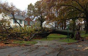 fallen-tree