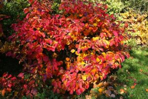 F.major in autumn