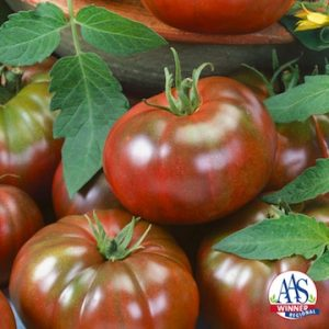 Tomato Chefs Choice Black