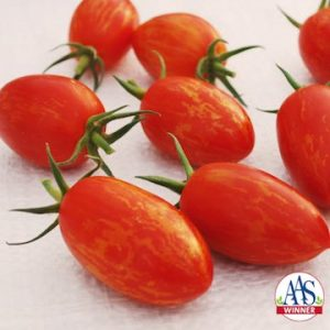 Tomato Red Torch