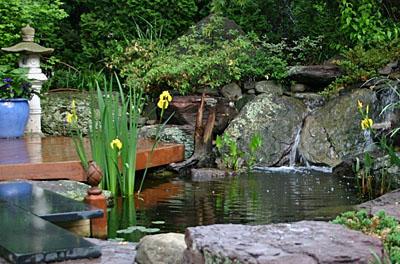 informal pond