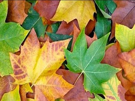 leaves colored