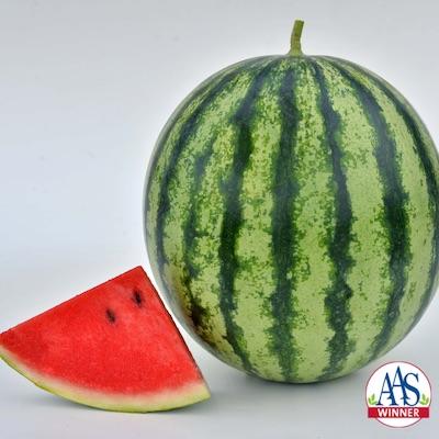 Mambo Watermelon