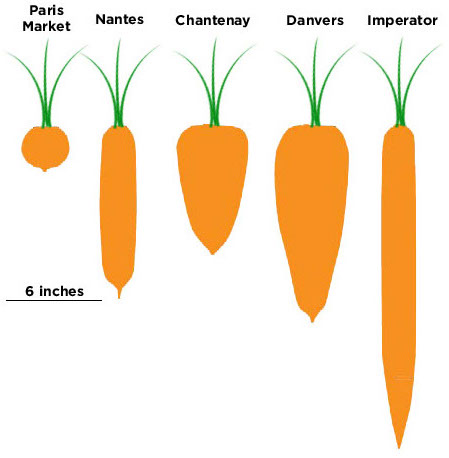carrot shapes