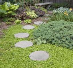 step ground cover